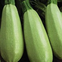 I'm sexier and tastier than my cousin, the zucchini.