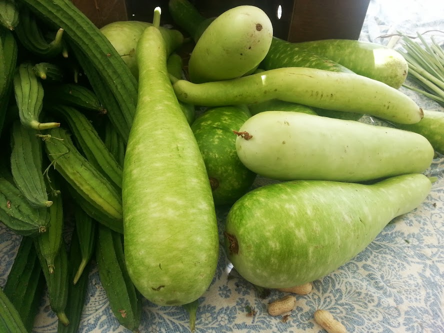 Opo squash, which were huge! See next pic for size reference.