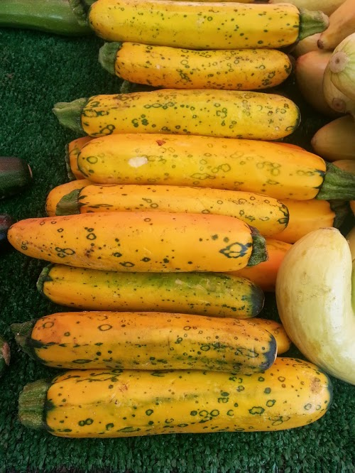 Look at the cool spots on these yellow squashes! I believe it is dreaming of becoming a zucchini one day.