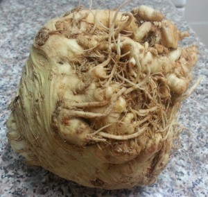 Celeriac AKA One Ugly Dude
