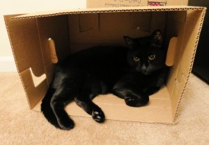 Ash in a box. Boxes are just simplified cat traps.