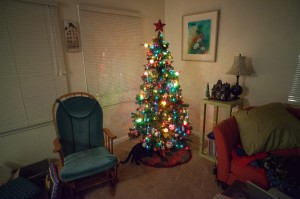 Here is a picture of my pretty Christmas tree! Photo by Jason Hullinger