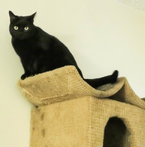 Tub Tub  - King of the Cat Tree. When did my cat turn into a vulture!?